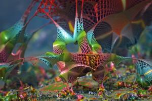 bird of paradise experiment