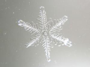 Natural Fractal Snowcrystal Foto I